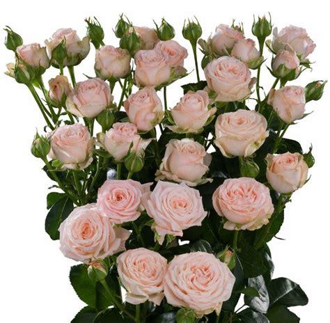 auswest petals