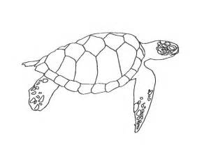 turtle template sea turtle coloring pages coloring home