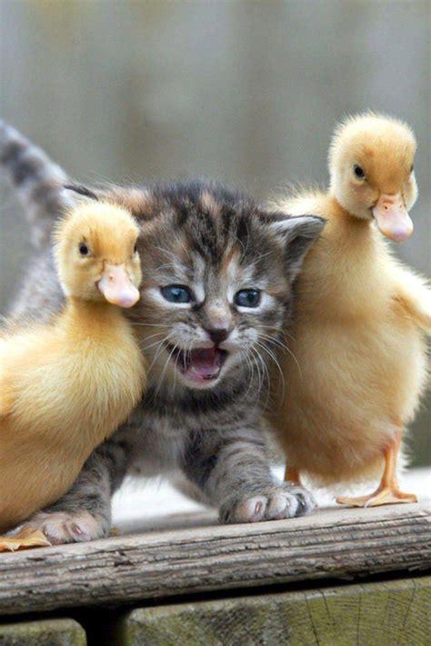 Topi Okkey 100 foto hewan lucu dan imut yang siap akan menghiburmu