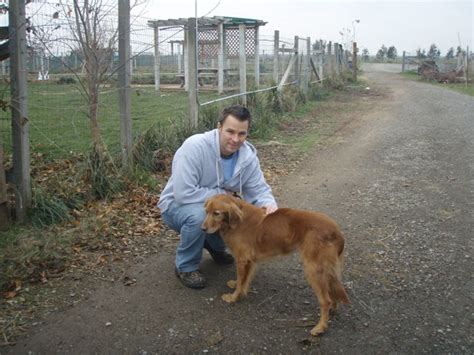 homeward bound golden retriever rescue sacramento homeward bound golden retriever rescue