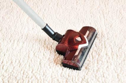 uringeruch aus teppich entfernen teppich reinigen hundeurin affordable auto hund putzen