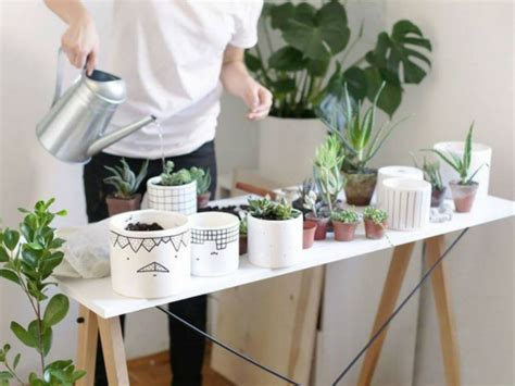indoor plants create your own indoor garden