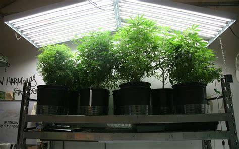 grow lights  growing cannabis  buyers guide