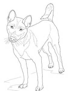 wild dog coloring page new guinea singing dog coloring page free printable