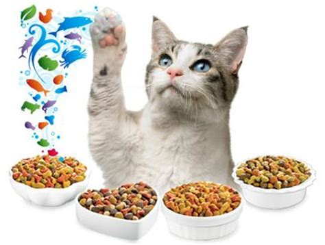 best senior food the best cat food for senior cats
