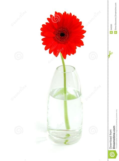 Gerbera Designs Xl Messenger by Gerbera In A Vase Stock Photo Image 946360