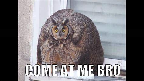 Who Owl Meme - owl memes youtube