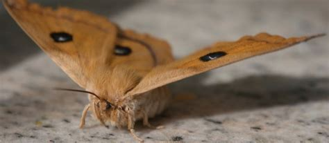 moths in house meaning how to get rid of moths in the house