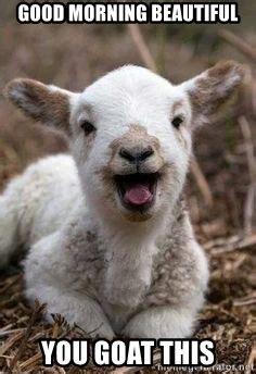 Good Morning Beautiful Meme - good morning beautiful you goat this annigoat meme
