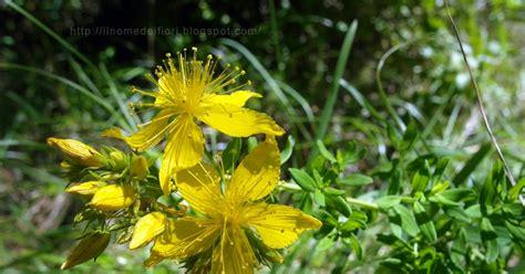 fiori gialli nome in nome dei fiori gialli