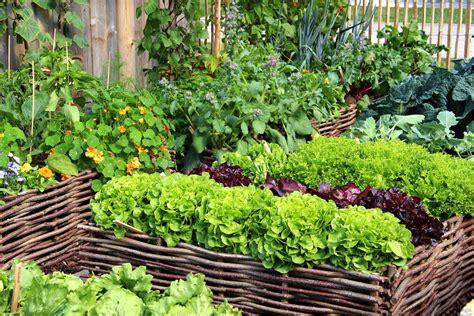 Garten Hochbeet Pflanzen by Hochbeet Fruchtfolge Sch 228 Dlingsvertreibende Pflanzen
