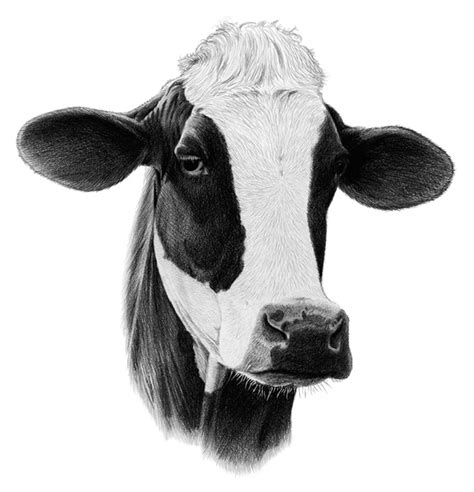 scow head dairy cliparts