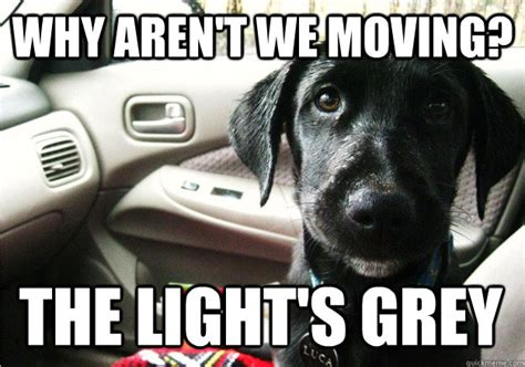 Dog Problems Meme - what dogs are thinking while at a red light beheading