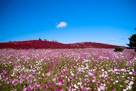 Restay Mito Mito Japan Asia mito kochia hill kanto japon la randonn 233 e mito