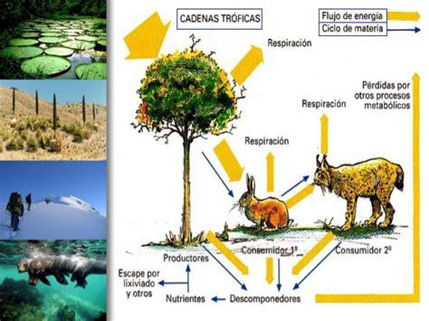 cadena trofica bosque boreal uso de las tics ecosistemas cadena trofica ciclo
