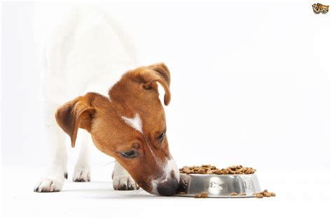 is feeding people food to pets ethical how to manage feeding a dog to identify allergens pets4homes
