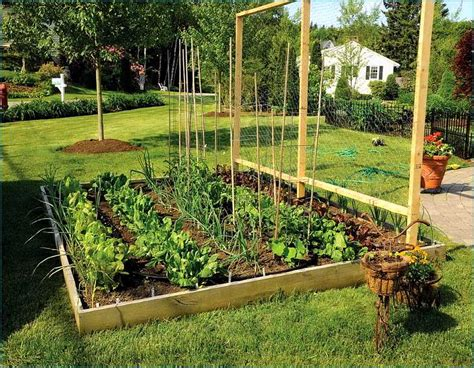 garden in backyard best vegetables for edible and organic backyard garden artenzo