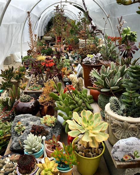 Succulent Garden Layout 21 Succulent Garden Designs Garden Designs Design Trends Premium Psd Vector Downloads