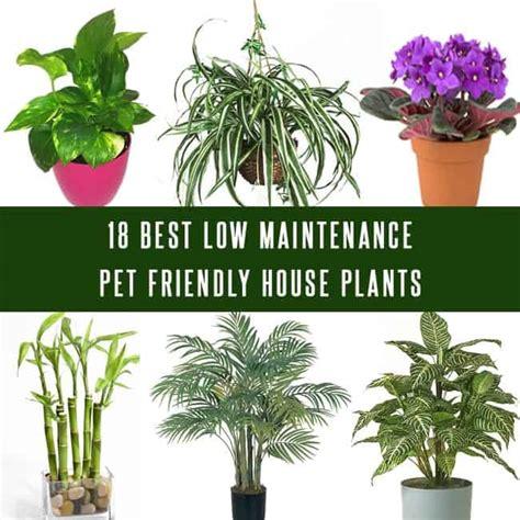 maintenance pet friendly house plants gardenoid