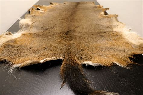hide tanning diy diy taxidermy how to your own deer hide primitive survivors