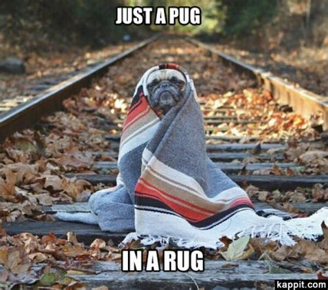 snl pug just a pug in a rug