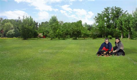 toelettatura cani pavia allevamento cani pavia allevamento cuccioli