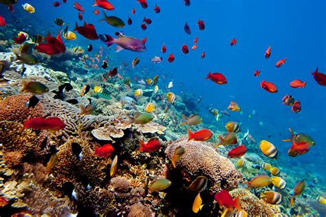 bali band kis at nusa penida snorkelez 233 s nusa penida 233 s nusa lembongan szigeteken