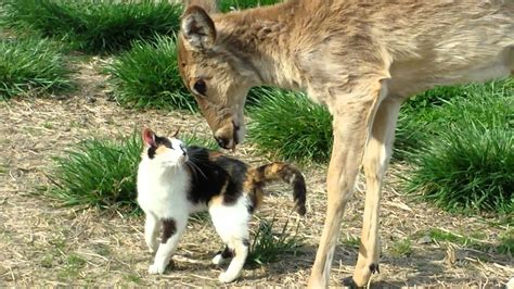 cat and cat and deer are friends with cats