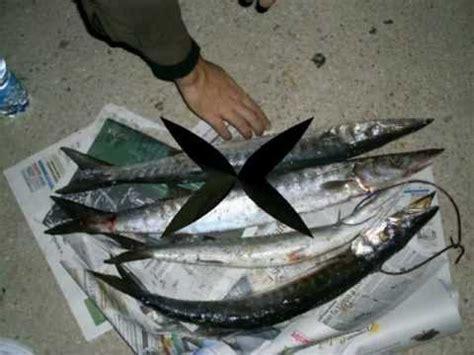 spinning nei porti spinning nei porti di catania 2 con pippo barracuda