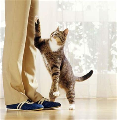 come allevare un gatto come allevare un gatto fare di una mosca