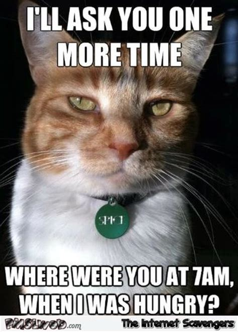 Funny Hungry Meme - where were you when i was hungry funny cat meme pmslweb