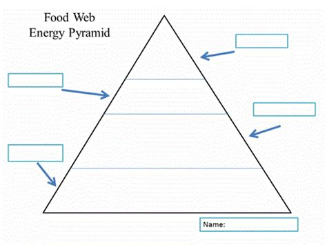 Blank Food Pyramid Template by Food Pyramid Coloring Pages