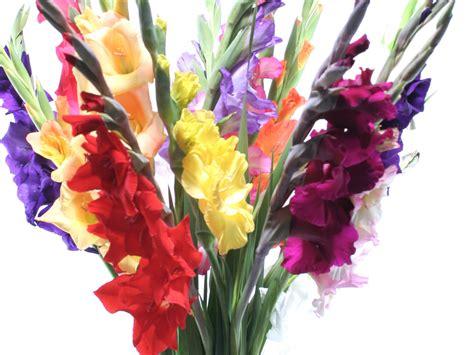 Schnittblumen Im Herbst by Blumen Nach Jahreszeit Schnittblumen F 252 R Jede Saison