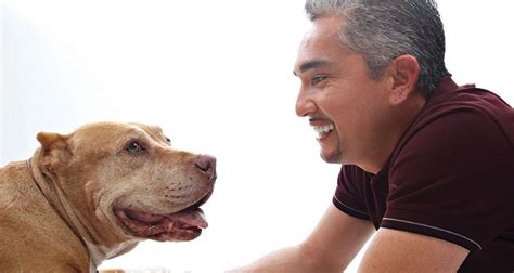 cesar millan puppy cesar millan investigated for possible animal cruelty abc10