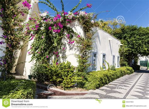 white house florist typical turkish street with white house and bougainvillea flowers stock photo image