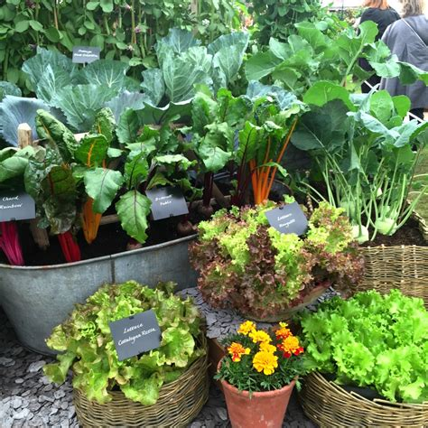 what vegetables can i grow in my garden growing vegetables in containers