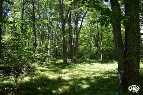 Wi Small Search Small Acreage For Sale In Recreational Area Of Eastern Wi Whitetail Properties