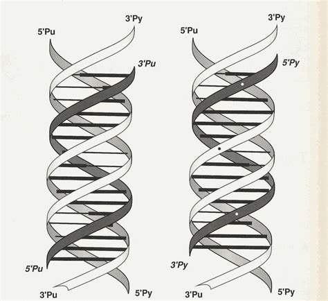 triple helix dna 116 best images about tattoos on pinterest