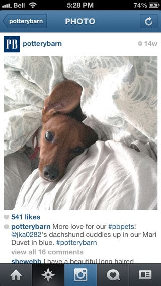 puppy captions for instagram 5 best types of instagram photos to drive engagement