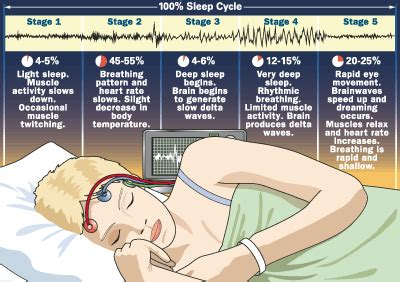 Five Stages Of Sleep Essay by The Sleep Cycle What S Really Going On While You Re Catching Your Zzz S The Berkeley Science