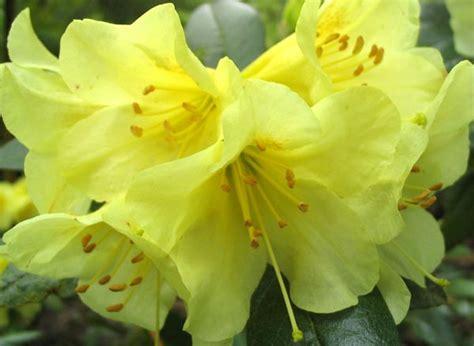 rhododendron garden coach photos