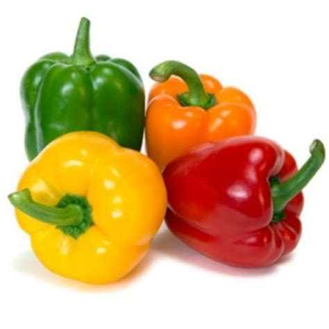 bell peppers for dogs can i give my bell peppers can pet dogs eat bell peppers