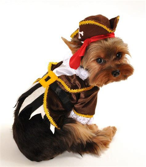costumes for small dogs costumes small costumes large costumes