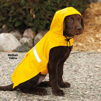 puppy raincoat in yellow coat in yellow coat image breeds picture