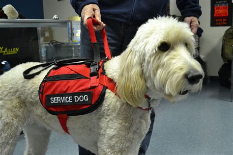 service for dogs my for the future anxiety service