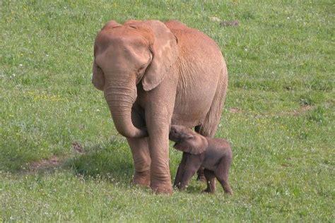ver imagenes sorprendentes de animales planes con ni 241 os d 243 nde ver animales en semilibertad