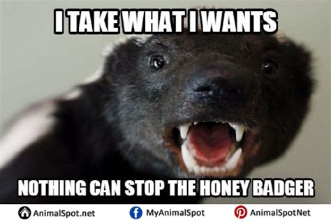 Honey Meme - honey badger memes