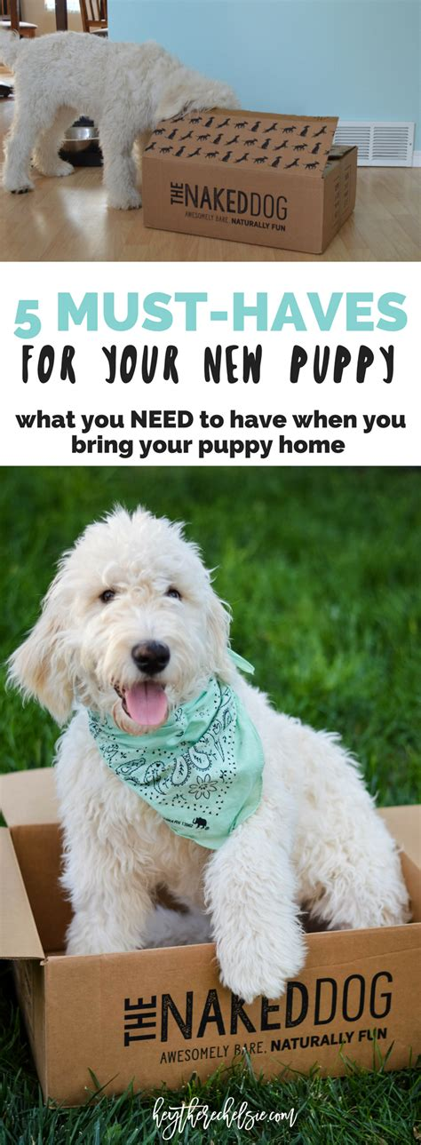 puppy must haves hey there chelsie salt lake city based style pursuing a vibrant
