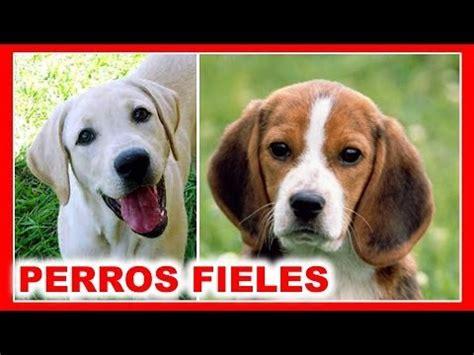 imagenes de animales juguetones los 10 perros m 225 s fieles del mundo youtube