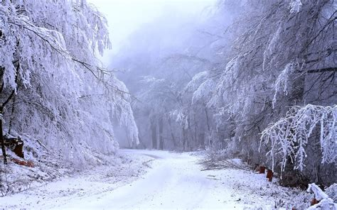 snow images snow heaviness 3000 x 1875 forest photography